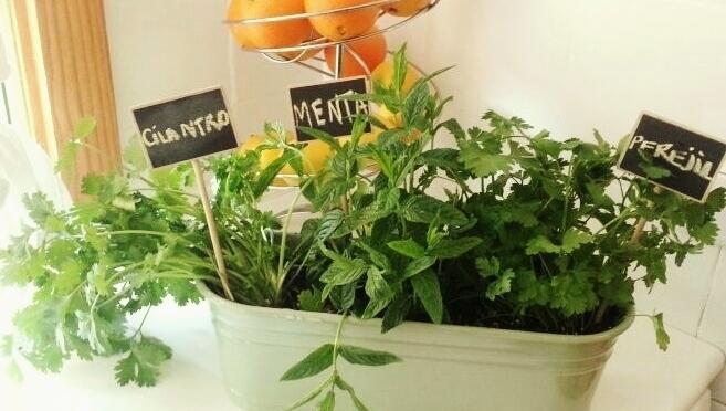 Haz un pequeño jardín de plantas comestibles en tu cocina